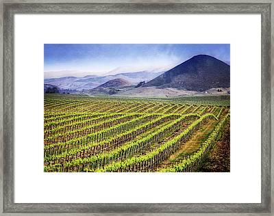 Framed Print featuring the photograph Vineyard by Scott Kemper