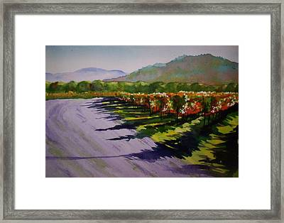 Vineyard Shadows Framed Print