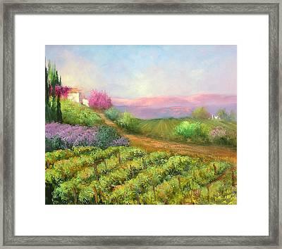 Vineyard Spring Framed Print by Sally Seago