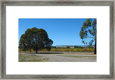 Vineyard Trees Framed Print