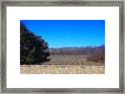 Vineyard View Framed Print by Brian Manfra