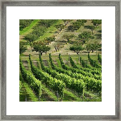 Vineyards And Orchards Framed Print