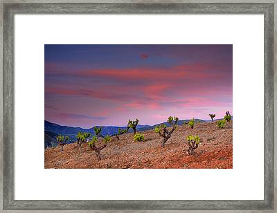 Vineyards At Sunset In Spain Framed Print by Guido Montanes Castillo
