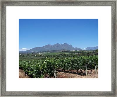 Vineyards Cape Town Framed Print by Vijay Sharon Govender
