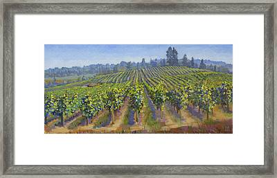 Vineyards In California Framed Print by Dominique Amendola