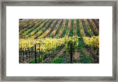 Vineyards In Healdsburg Framed Print by Charlene Mitchell