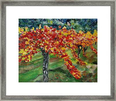 Vineyards In Napa Framed Print by Dorota Nowak
