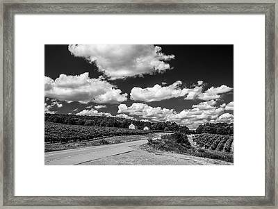Framed Print featuring the photograph Vineyards In Summer II by Steven Ainsworth