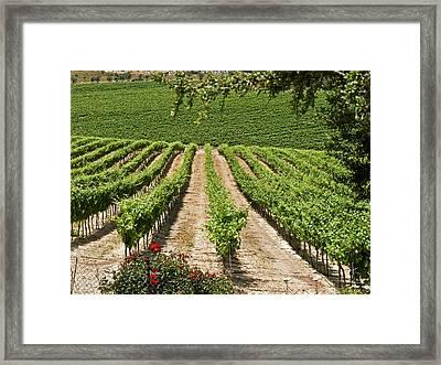 Vineyards In The Galilee 2 Framed Print by Arik Baltinester
