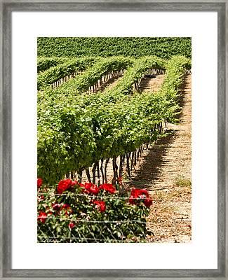 Vineyards In The Galilee  4 Framed Print by Arik Baltinester