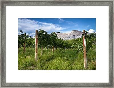 Vineyards In The Grand Valley Framed Print by Teri Virbickis