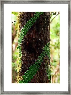 Vining Fern On Sierra Palm Tree Framed Print by Thomas R Fletcher