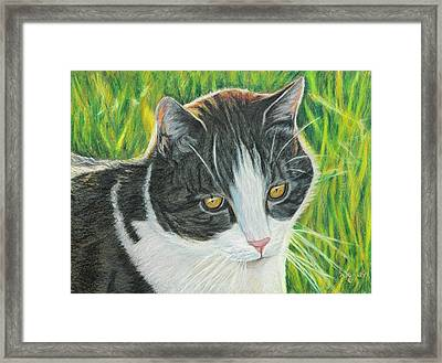 Vinny In Late Afternoon Framed Print by Angela Finney