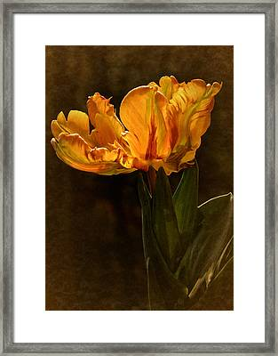Vintage 2017 Tulip Framed Print by Richard Cummings