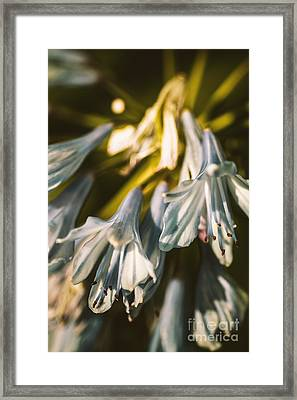 Vintage Agapanthus Flower Framed Print by Jorgo Photography - Wall Art Gallery