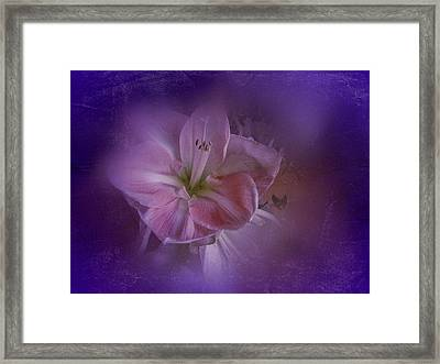 Framed Print featuring the photograph Vintage Amaryllis No. 3 by Richard Cummings