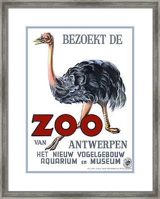 Vintage Antwerp Zoo Ostrich Advertising Poster Framed Print