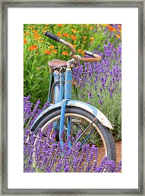 Framed Print featuring the photograph Vintage Bike In Lavender by Patricia Davidson