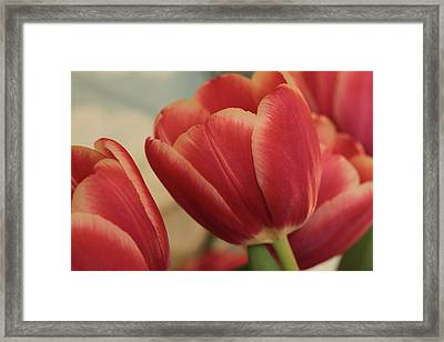Vintage Blooms Framed Print by Connie Handscomb