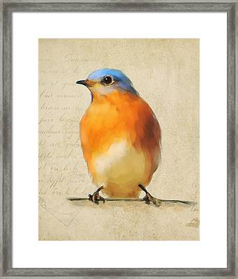 Vintage Bluebird Framed Print