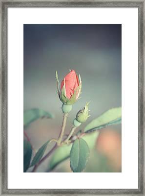 Vintage Bud Framed Print