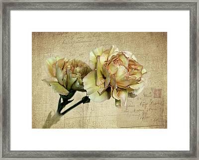 Vintage Carnations Framed Print by Judy Vincent