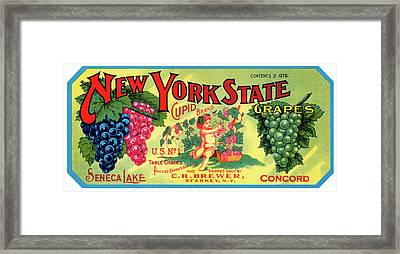 Vintage Concord Grape Packing Crate Label C. 1920 Framed Print by Daniel Hagerman