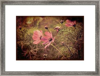 Framed Print featuring the photograph Vintage Cosmos by Douglas MooreZart