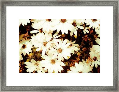 Vintage Daisies Framed Print by Denice Breaux