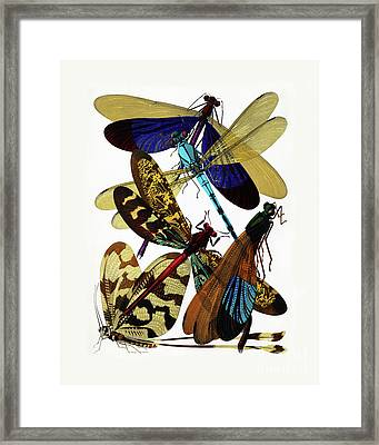 Vintage Damselflies, Dragonflies Etymology Illustration Framed Print by Tina Lavoie