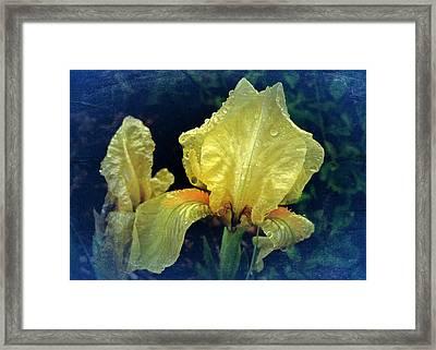 Vintage Dwarf Iris Framed Print by Richard Cummings