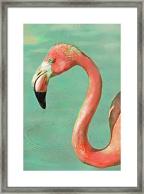 Framed Print featuring the digital art Vintage Flamingo by Jane Schnetlage