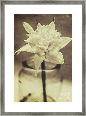 Vintage Floral Still Life Of A Pure White Bloom Framed Print by Jorgo Photography - Wall Art Gallery