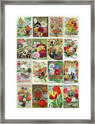 Vintage Flower Seed Packets 1 Framed Print