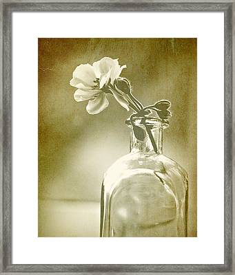 Vintage Geranium Framed Print by Amy Neal