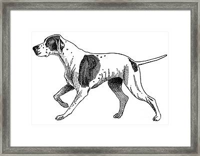 Vintage German Shorthaired Pointer Framed Print