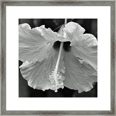 Vintage Hibiscus II Framed Print by Melanie Moraga