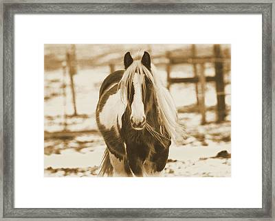 Vintage Horse On The Farm Framed Print by Dan Sproul