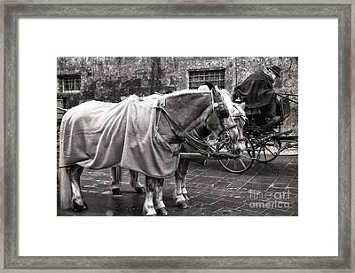 Vintage Horses In Salzburg Framed Print by John Rizzuto