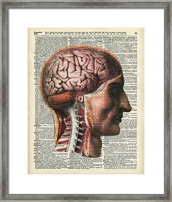 Vintage Human Brain Anatomy Framed Print by Jacob Kuch