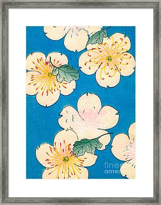 Vintage Japanese Illustration Of Dogwood Blossoms Framed Print