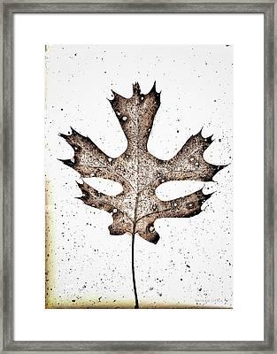 Vintage Leaf Framed Print