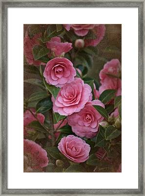 Framed Print featuring the photograph Vintage March 2017 Camillias No. 2 by Richard Cummings