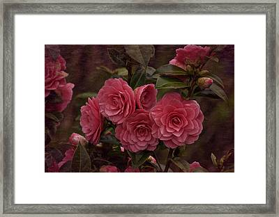 Framed Print featuring the photograph Vintage March 2017 Camillias by Richard Cummings