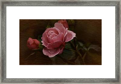 Framed Print featuring the photograph Vintage October Pink Rose by Richard Cummings
