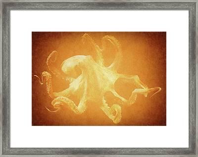 Vintage Octopus Framed Print by Dan Sproul