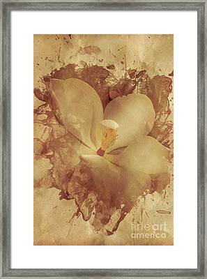Vintage Paper Magnolia Framed Print by Jorgo Photography - Wall Art Gallery