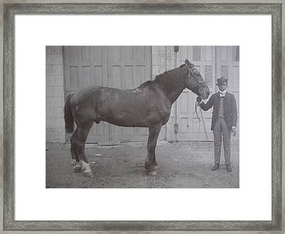 Vintage Photograph 1902 Horse With Handler New Bern Nc Area Framed Print