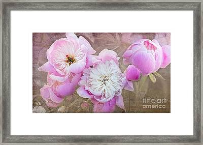 Vintage Pink Peonies Framed Print
