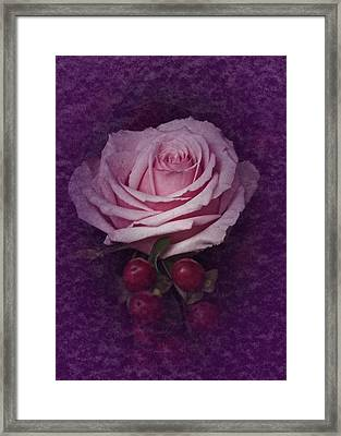 Vintage Pink Rose Feb 2017 Framed Print by Richard Cummings